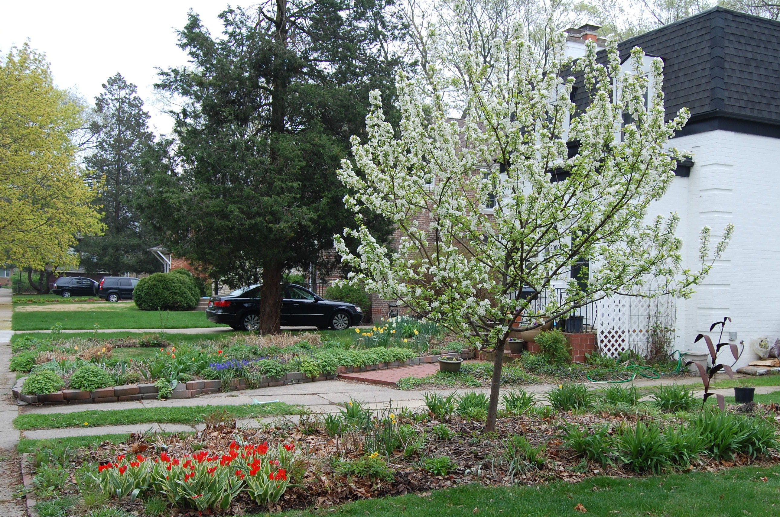 The Best Crabapples For Birds And Layered Garden Winner