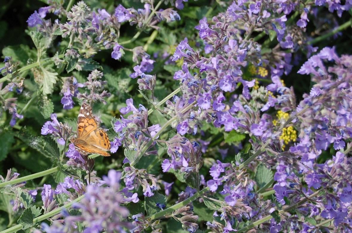 2 Butterfly again
