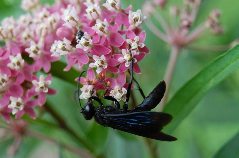 7-22 Black Wasp 1