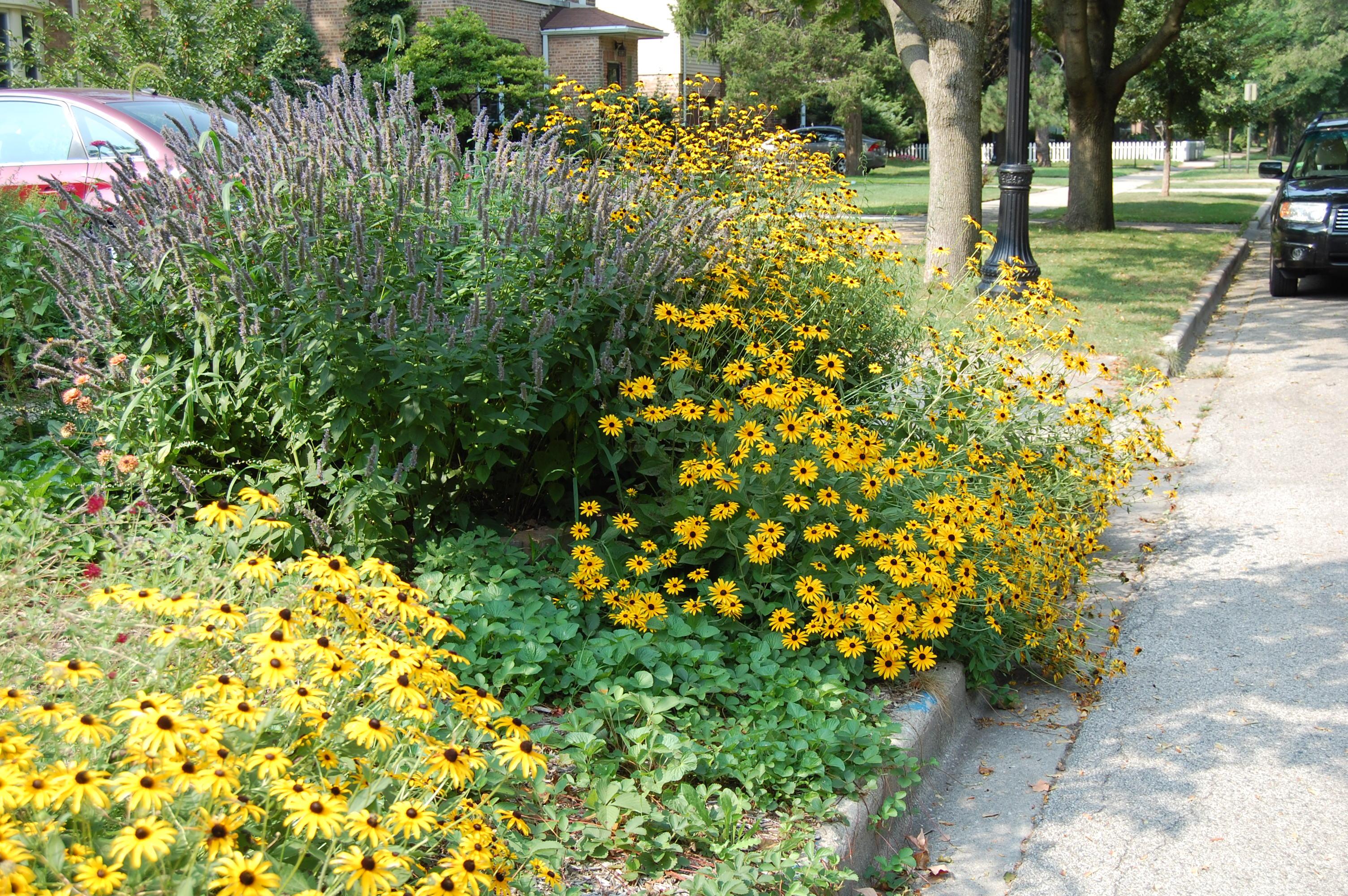 Planting Raised Wildflower Bed