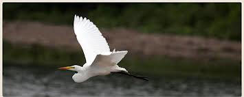 I'm hoping to see egrets while in South Carolina.