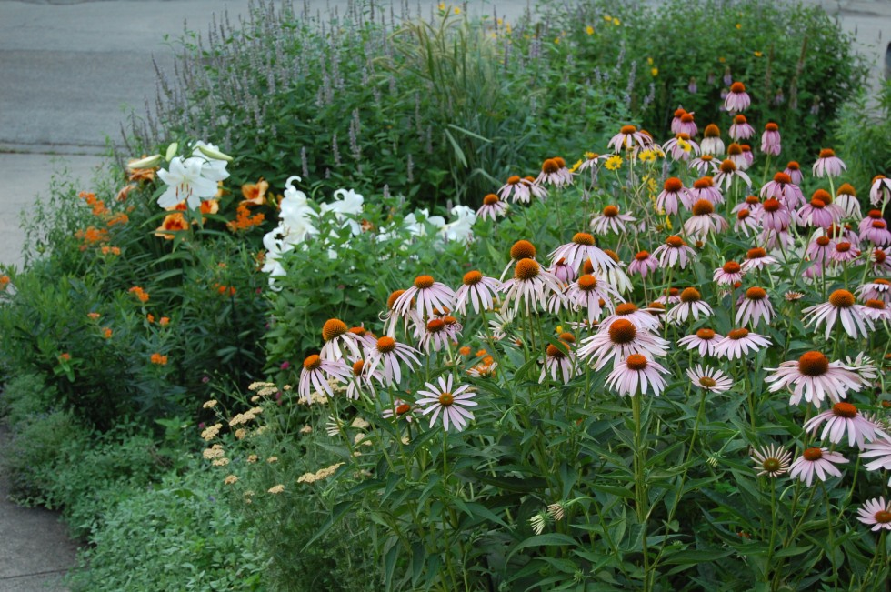 Purple coneflowers and Casa Blanca lilies