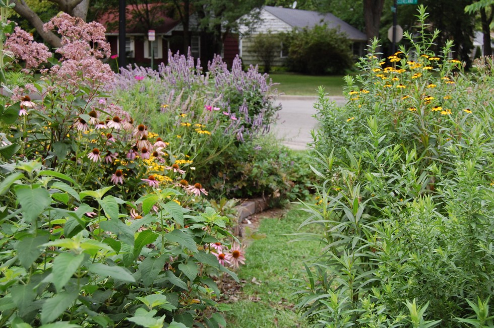 front garden, anise hyssop, purple coneflower, brown eyed susan
