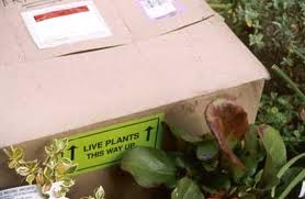 box of plants 2