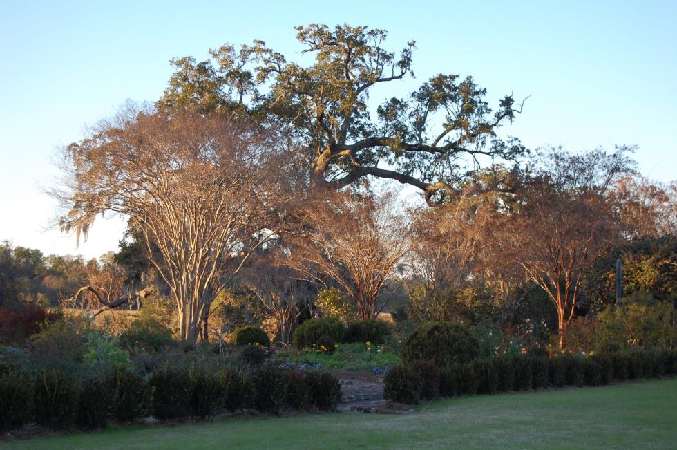 Boone Hall gardens