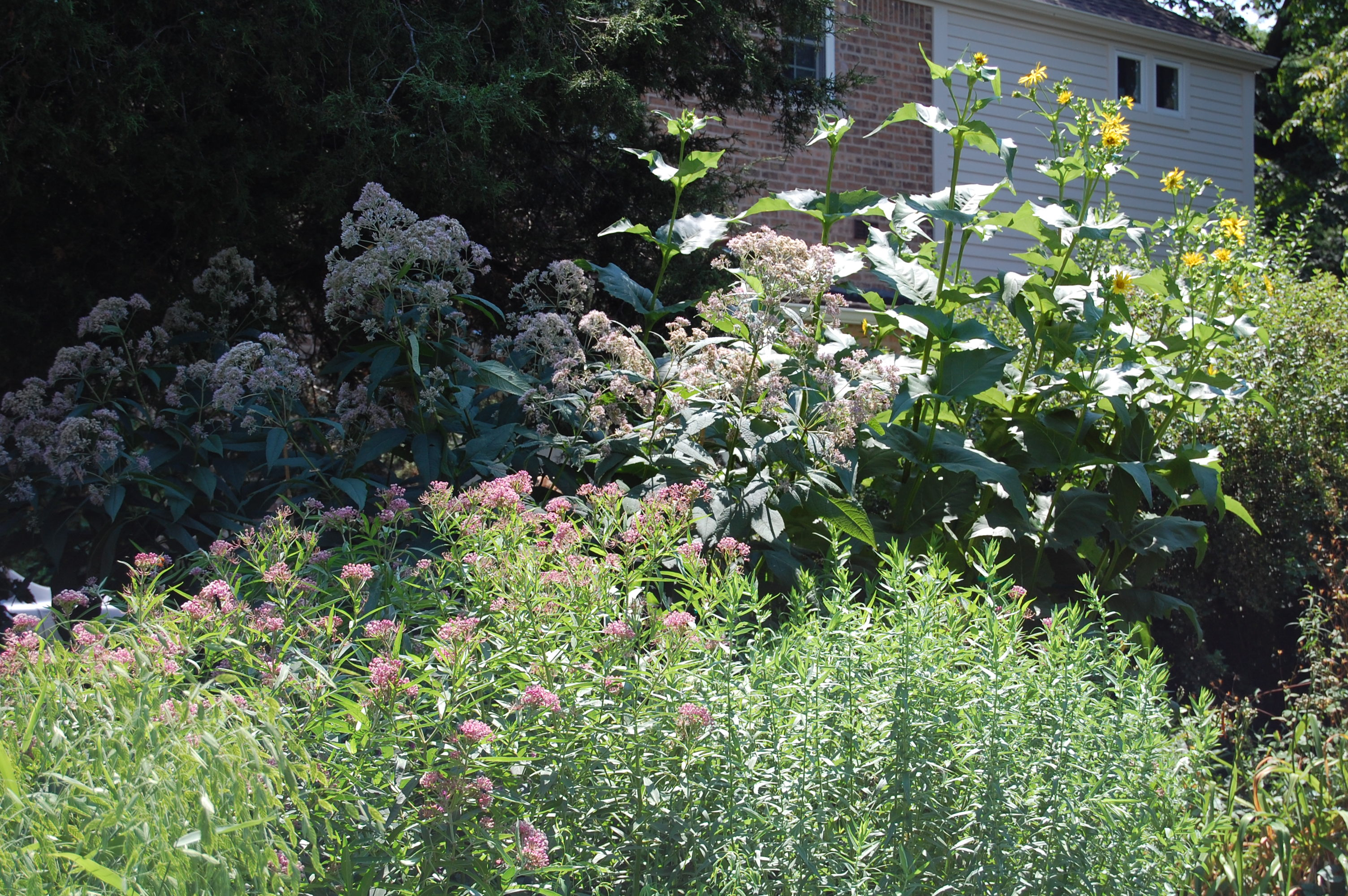 The Front Island Bed A Wildlife Friendly Spot Full Of Bold Plants