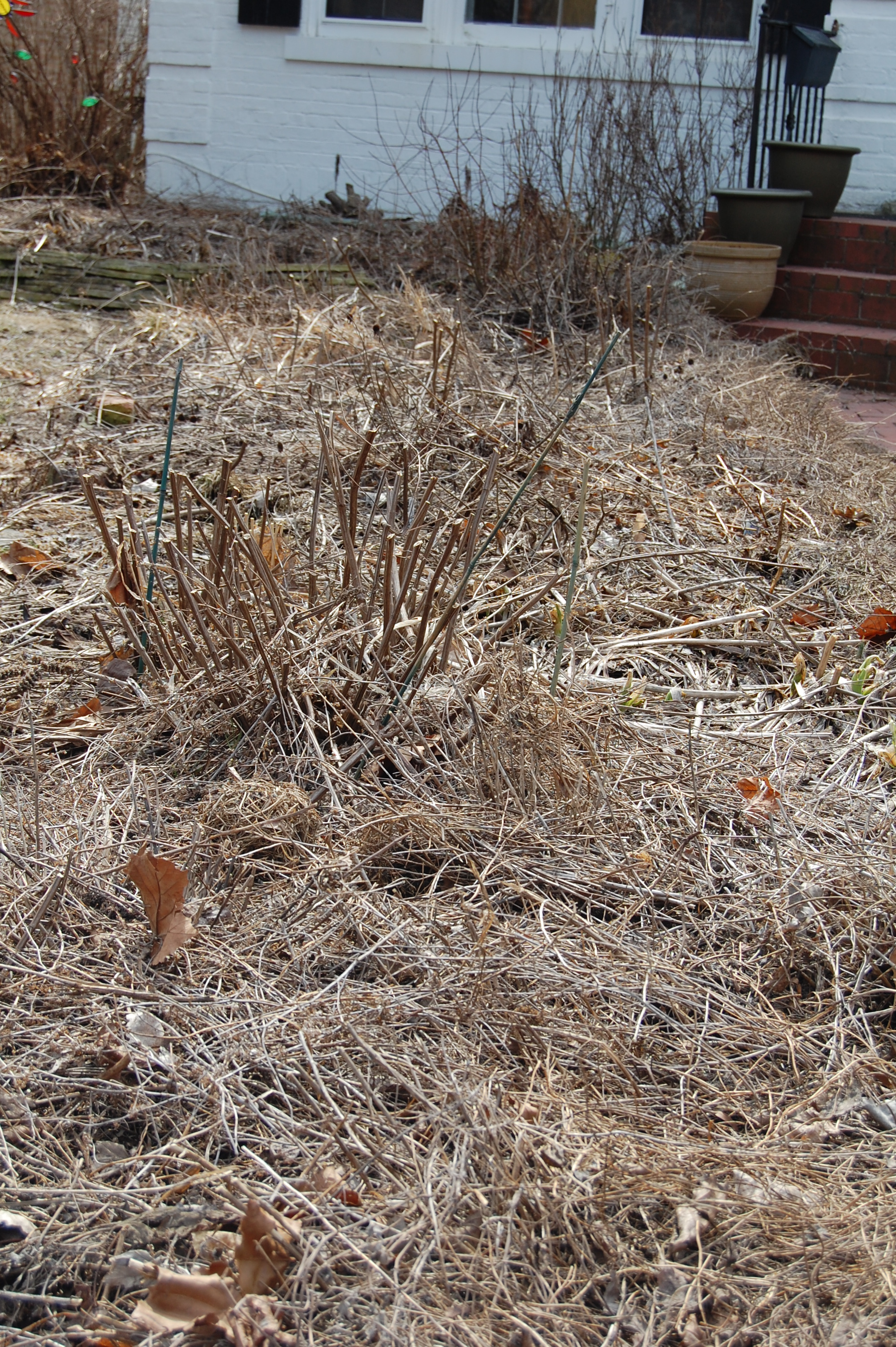 The Fuzzy Wuzzy Garden, or I Admit I Was Wrong About Spring Clean-Up