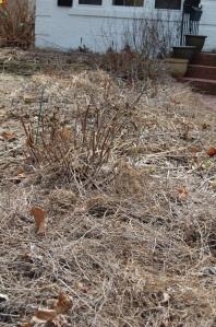 Garden Spring clean up