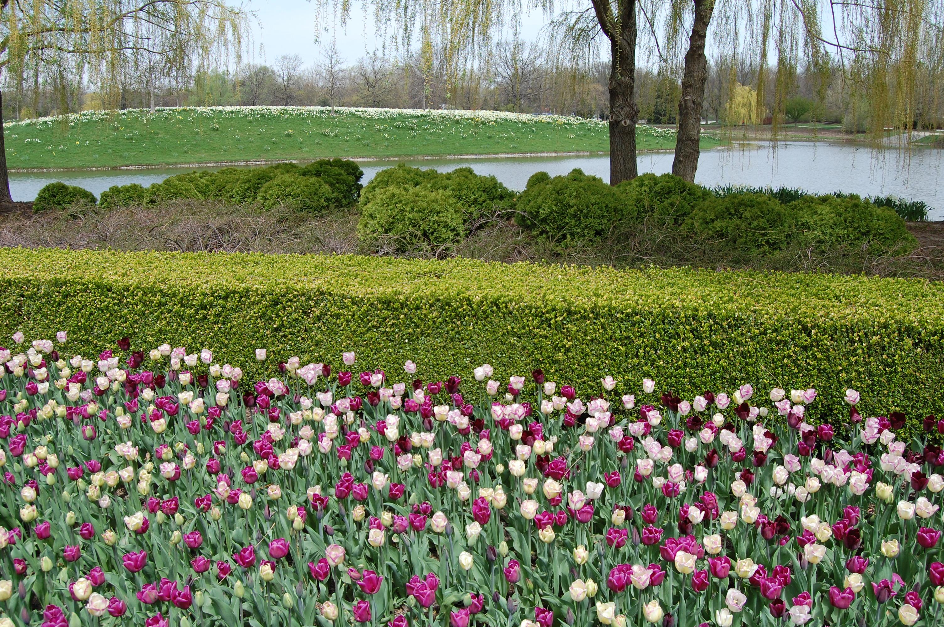 An early may walk through the chicago botanic garden - When you walk through the garden ...