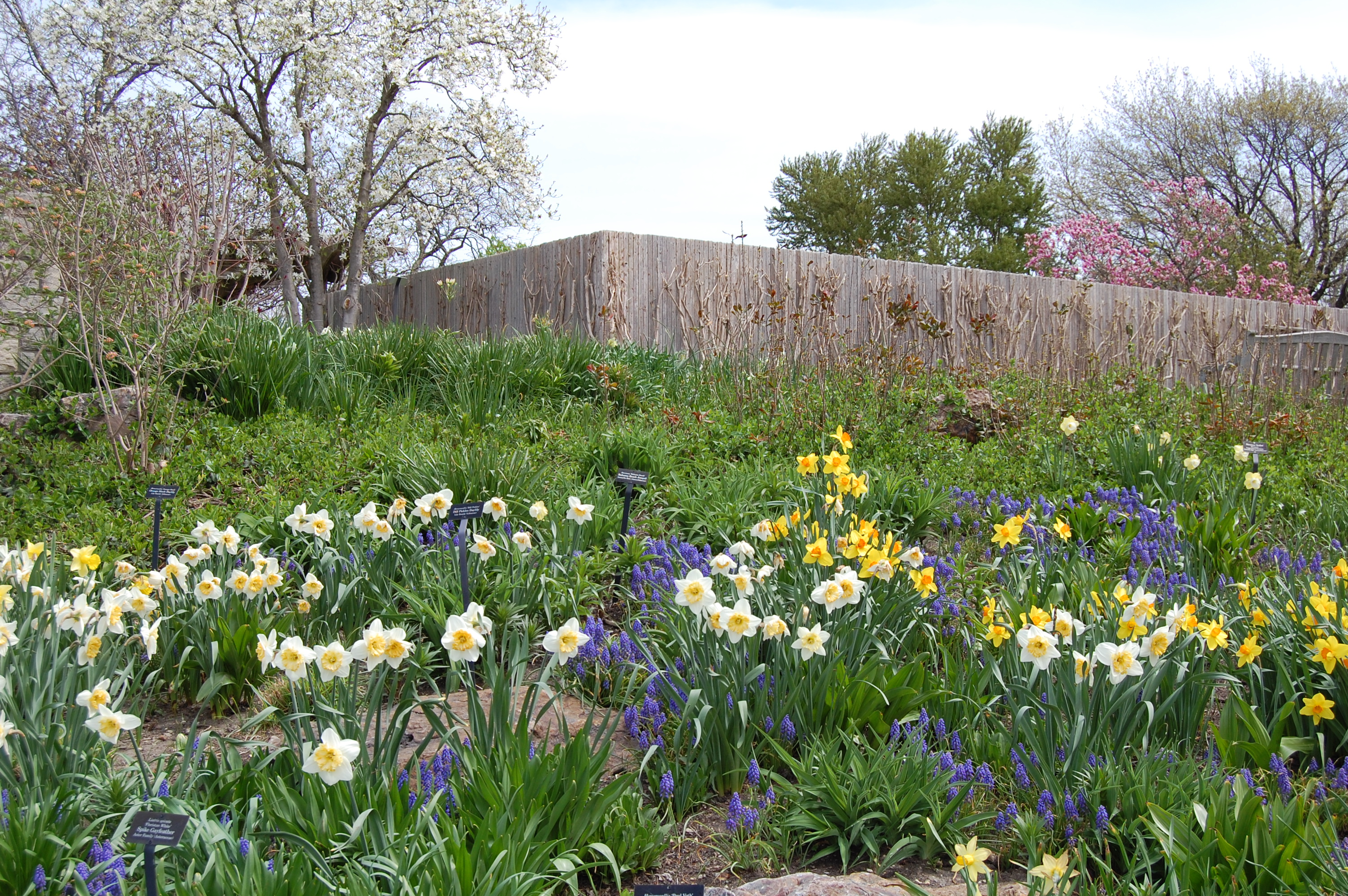 an early may walk through the chicago botanic garden u2013 gardeninacity