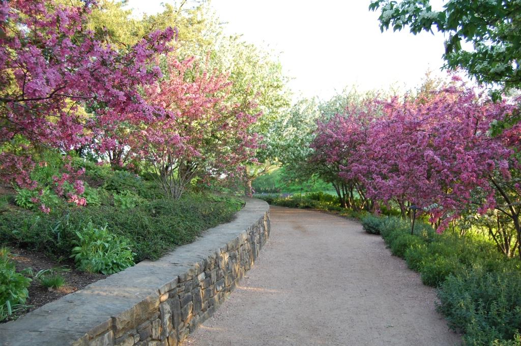 Chicago Botanic Garden, Crabapple blossoms