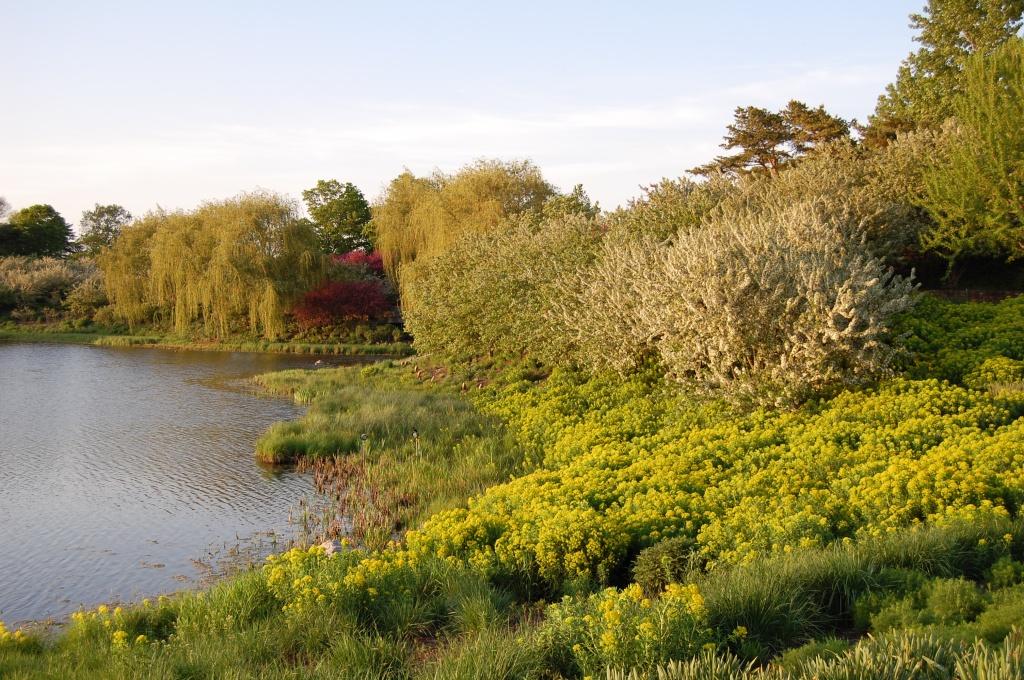 Chicago Botanic Garden, Euphorbia, Evening Island