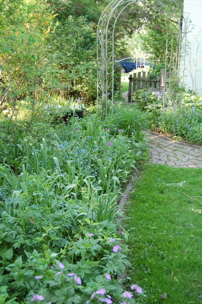Wild Geranium, Brunnera, Allium