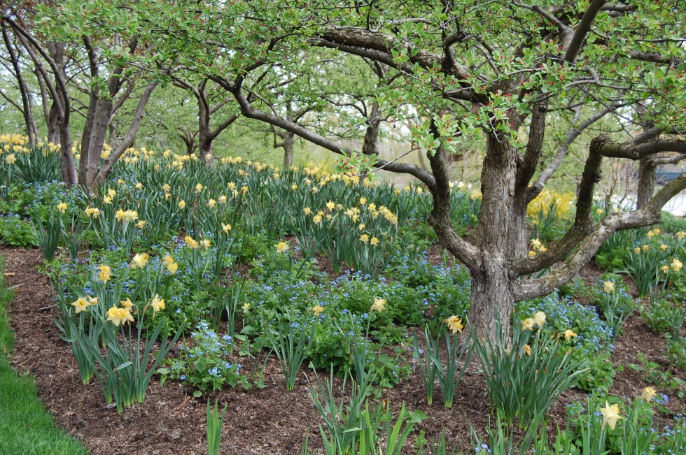 woodland garden 2 cbg may 4 20