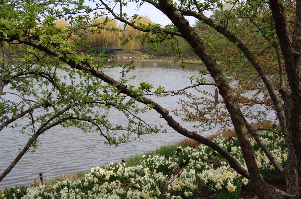 Evening Island, Chicago Botanic Garden