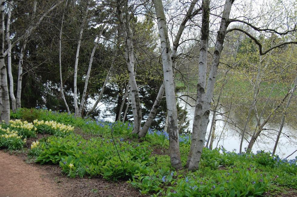 woodland garden cbg may 4 2013