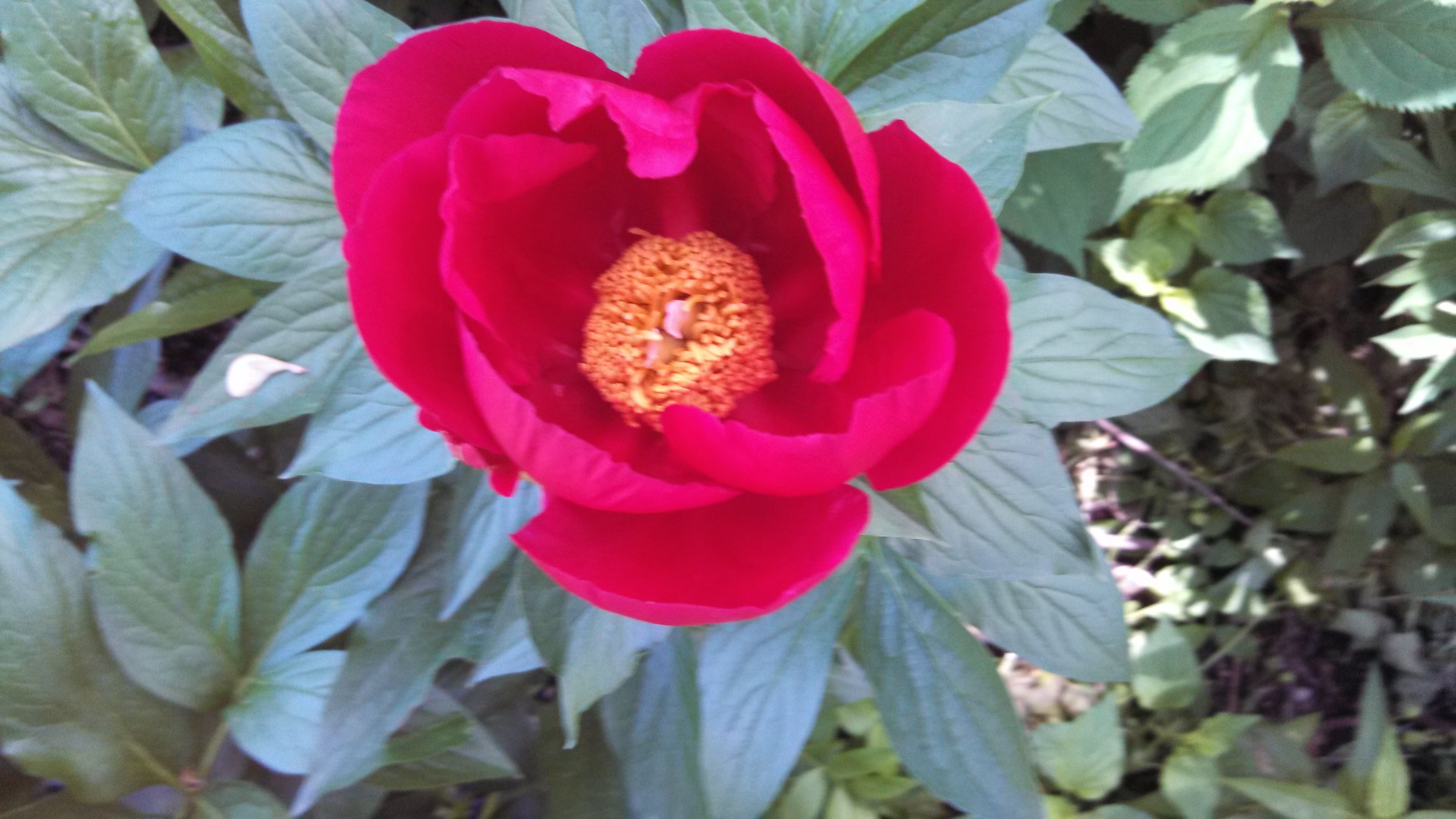 gardeninacity – Page 88 – Notes from a wildlife-friendly cottage garden