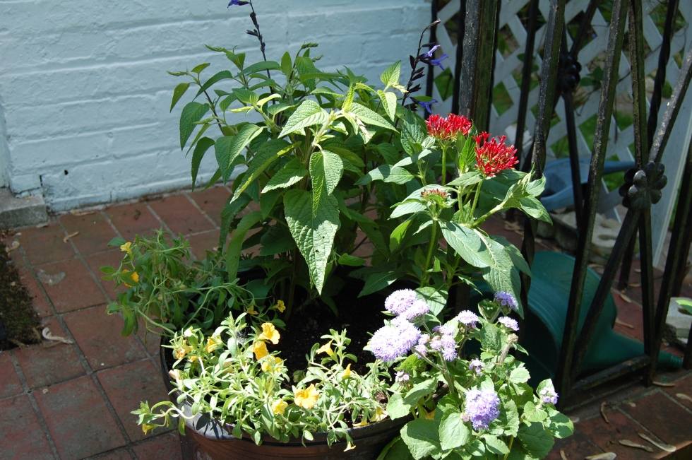 Summer Flowering Containers