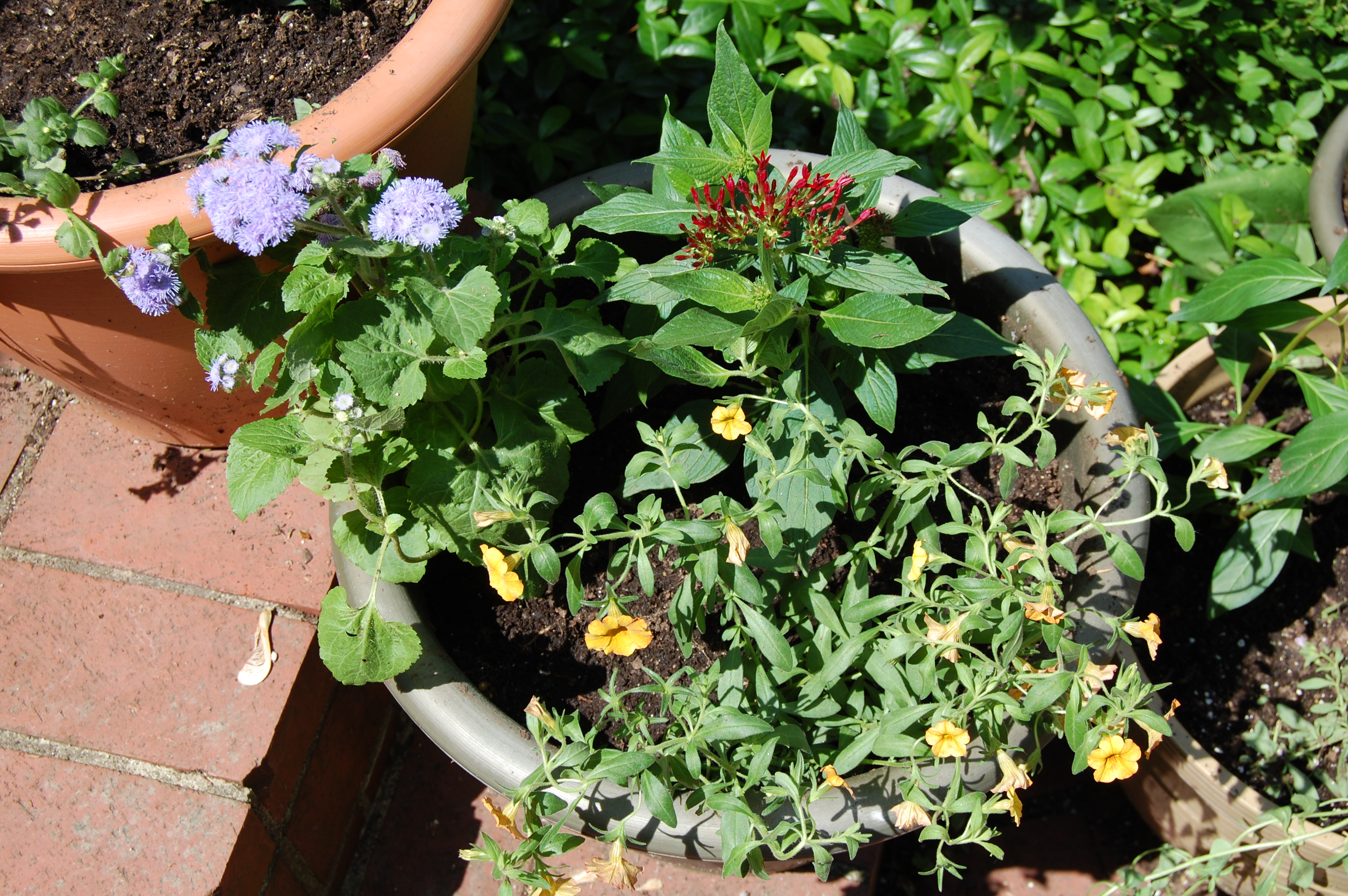 Summer annuals for containers in sun gardeninacity summer flowering container izmirmasajfo Choice Image