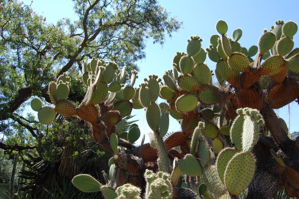 cactus and tree