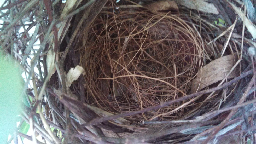 Available: One nest, never used.