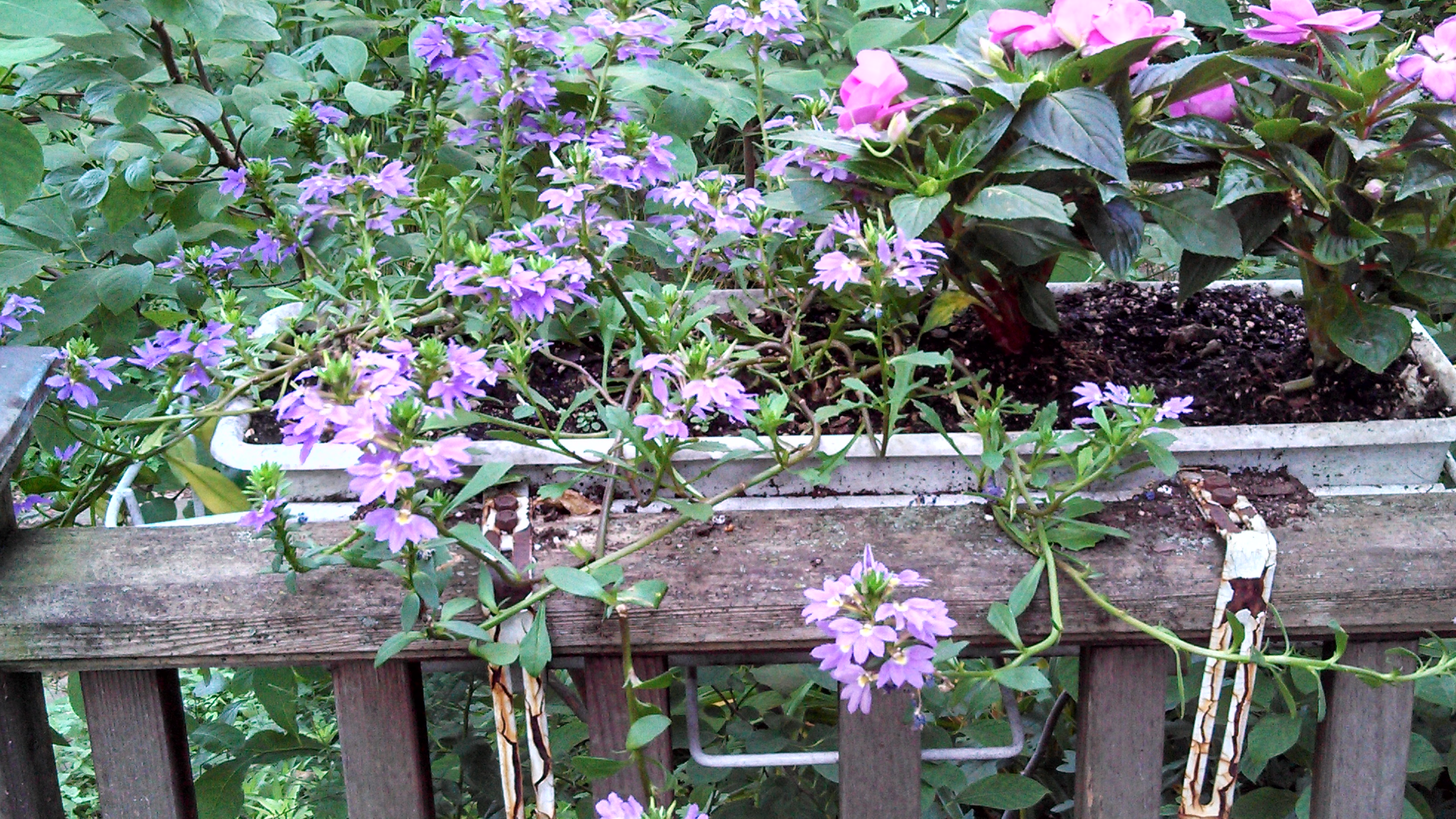 Replacing Impatiens In Containers For Shade Hits And Misses
