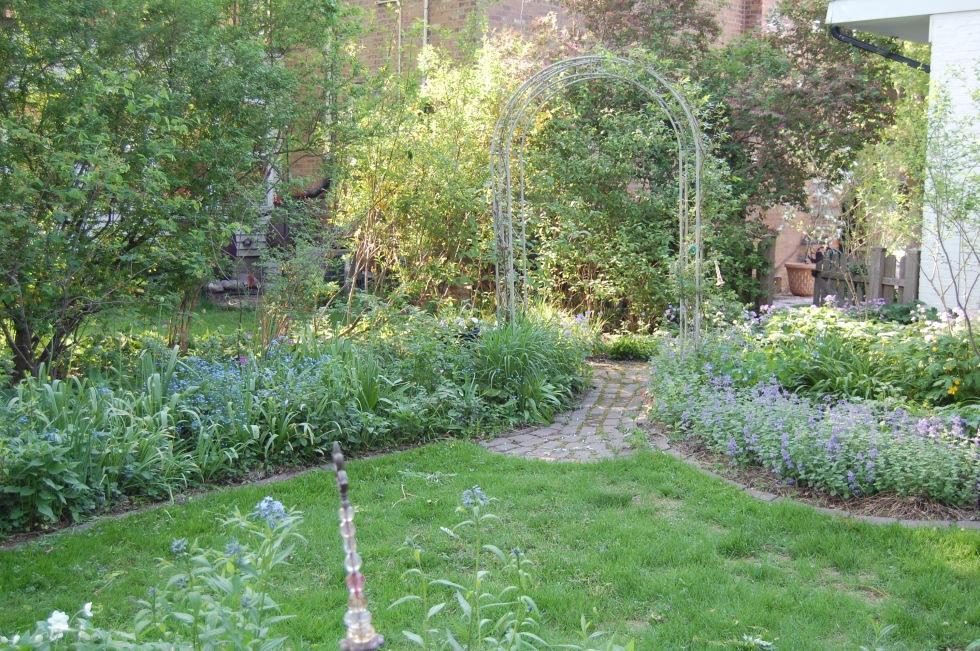 nepeta allium arbor back garden may 19 2013