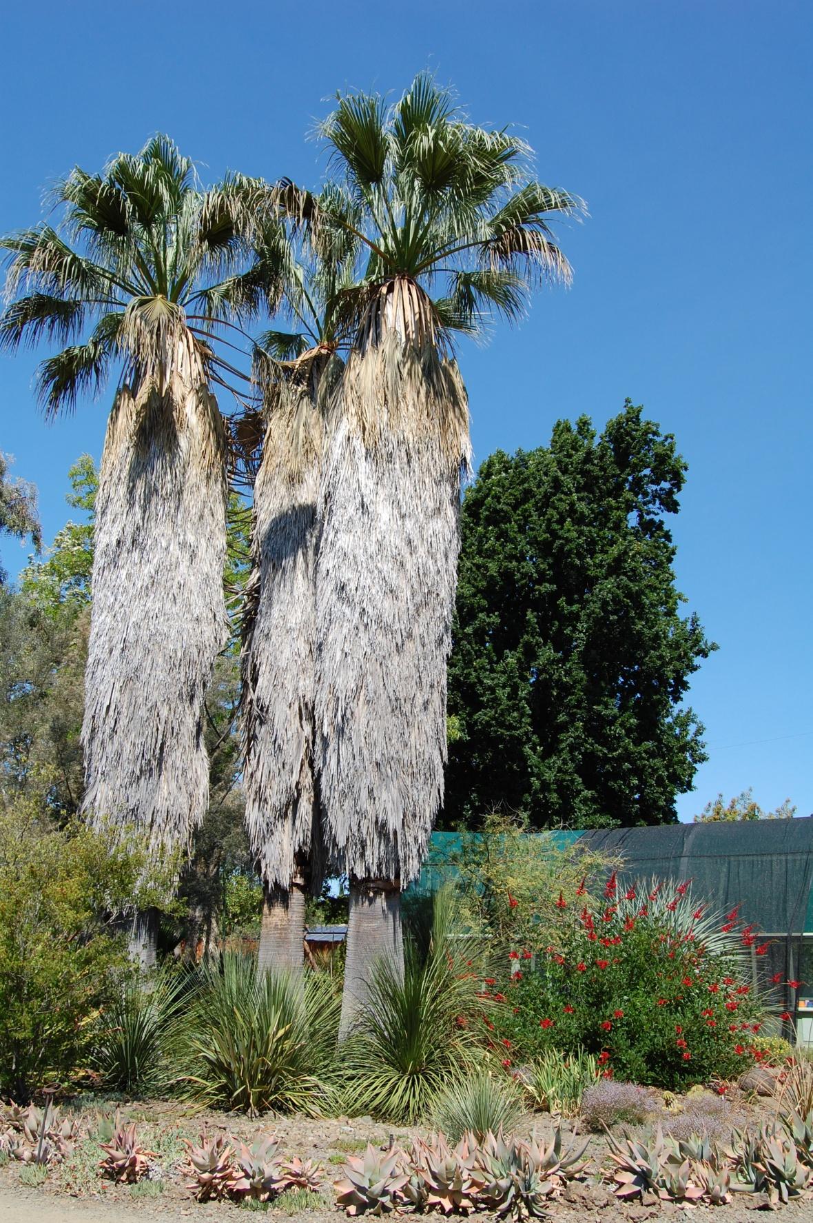 weird barrel trees
