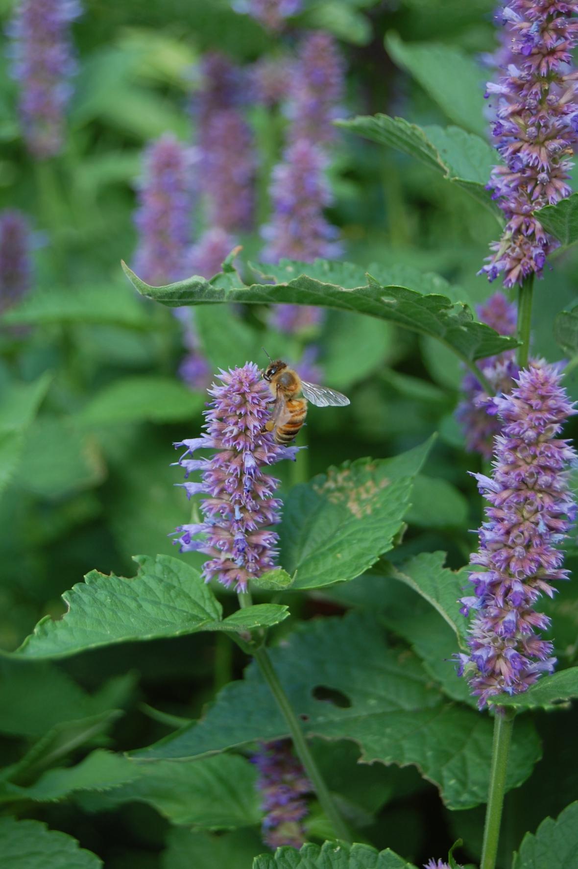 2013-07-28 17.03.35 bee d