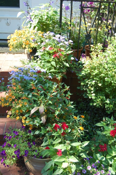 Flowering Containers up the steps to the front door. Photo: Judy