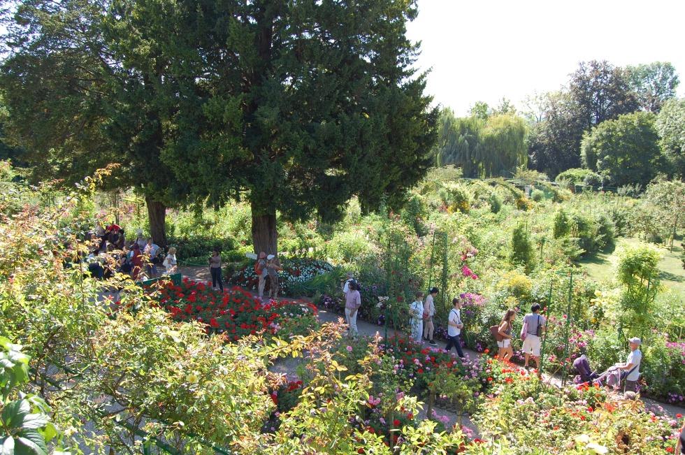 Giverny shrubs