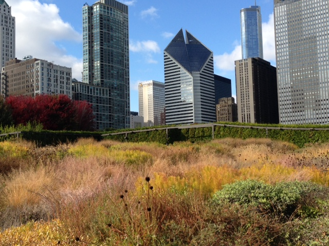 Chicago s lurie garden in late october gardeninacity for Piet oudolf fall winter spring summer fall