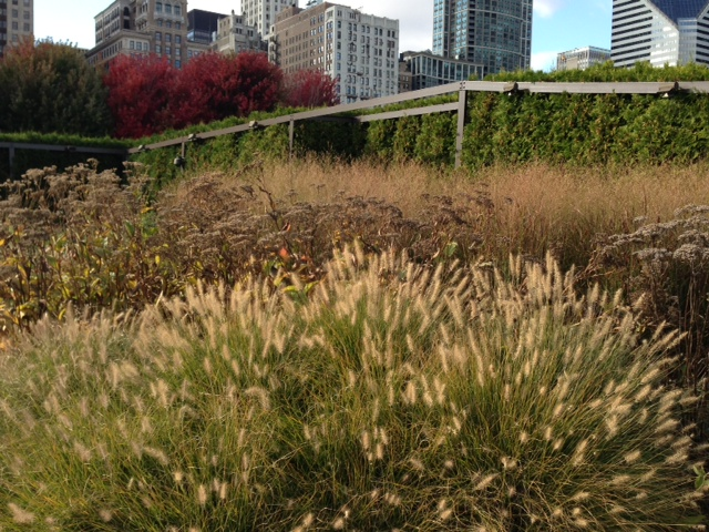 Oudolf documentary close to completion gardeninacity for Piet oudolf fall winter spring summer fall