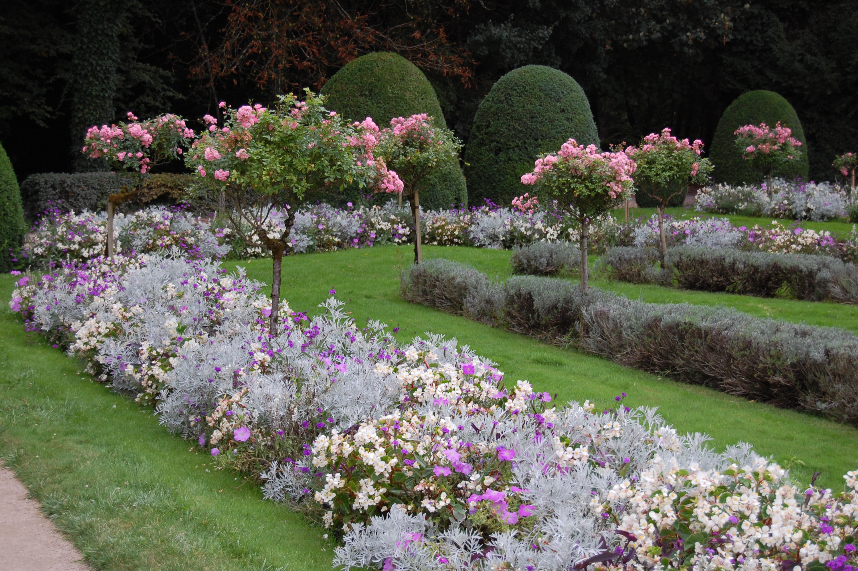 Landscaping Ideas Rose Garden : Rose standards in catherine s garden