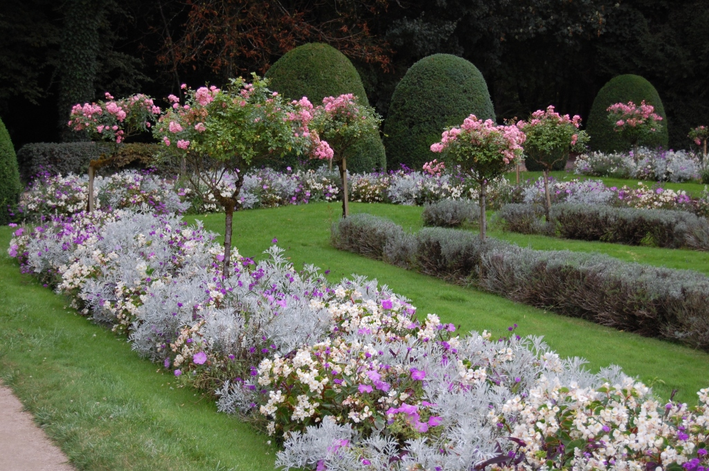 Rose standards at Chenonceau