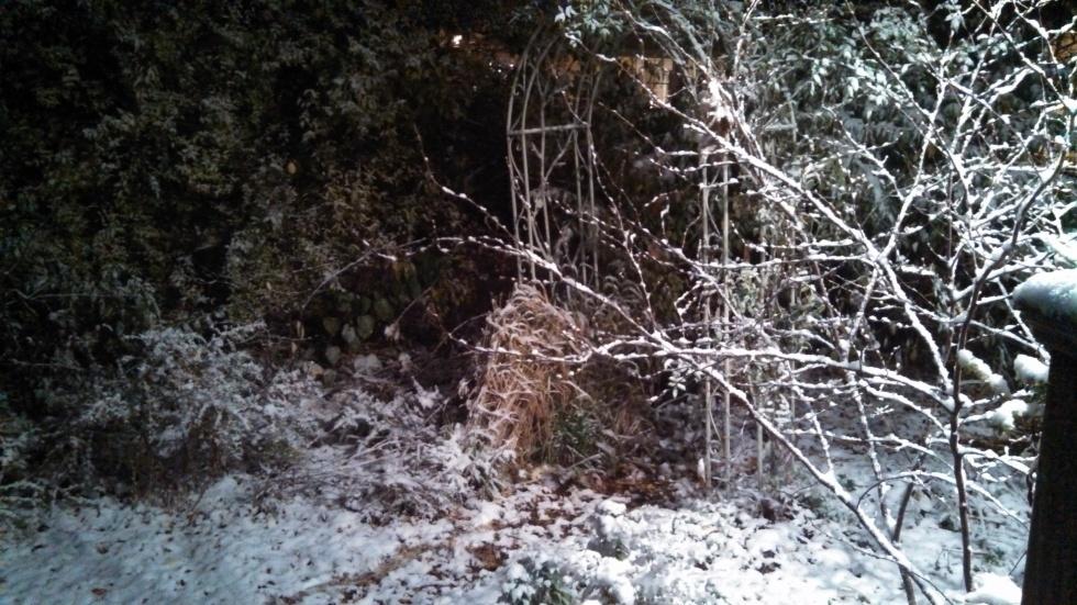 Spicebush, November Snow
