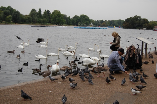 Hyde Park has a big lagoon called the serpentine. Lots of birds to feed.