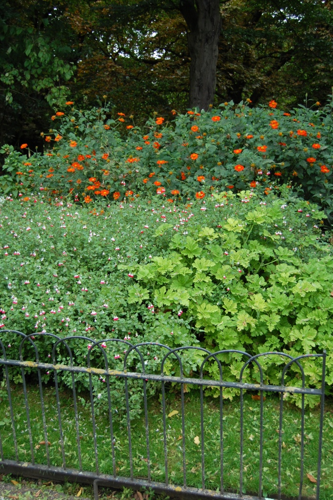 Tithonia and Hardy Geranium.
