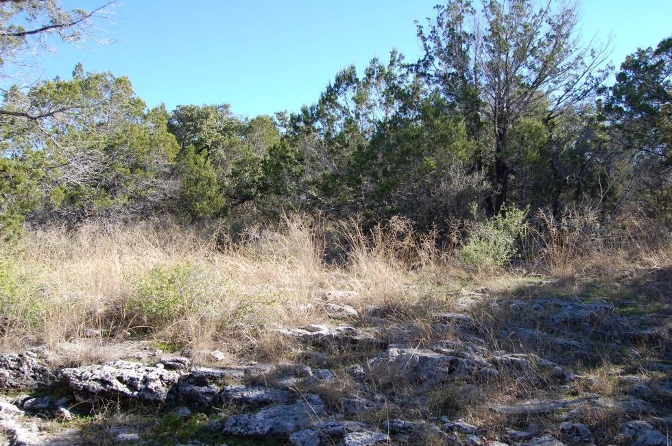 Texas hill country savannah