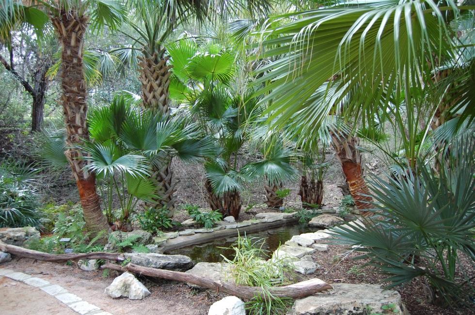 Zilker Prehistoric Garden