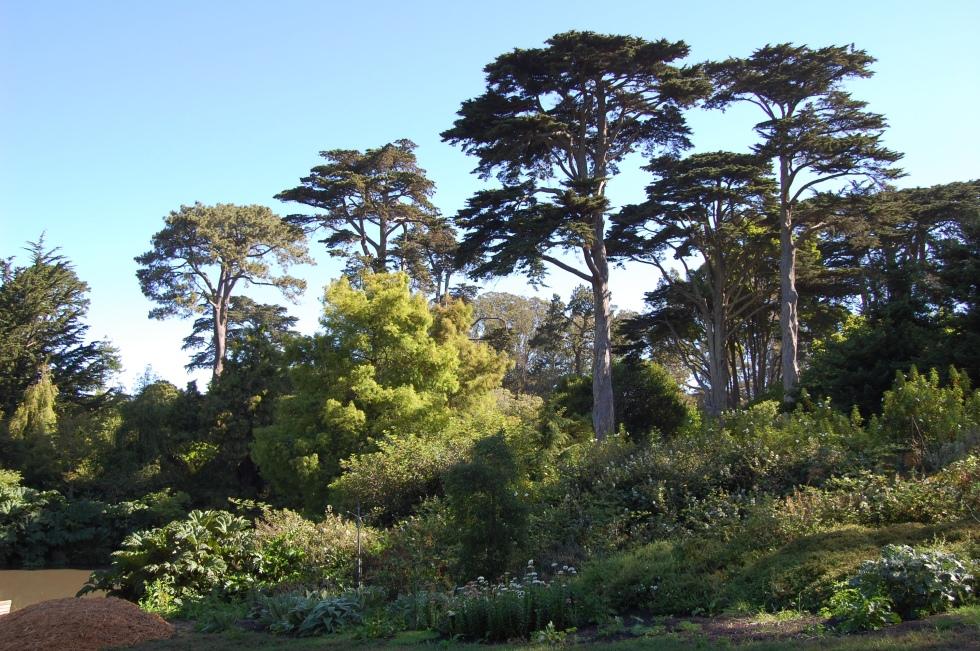 san francisco botanic garden