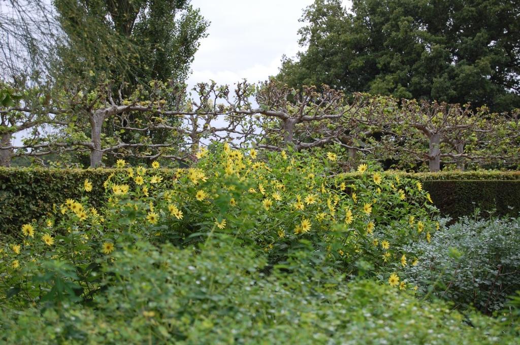 2013-09-12 10.18.24 Sissinghurst sunflowers