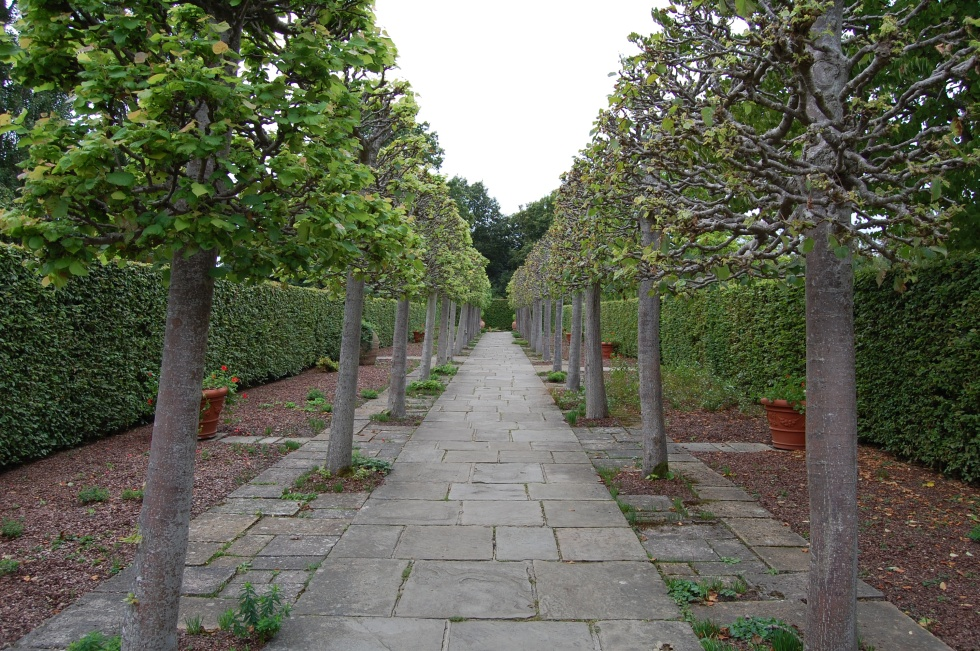 Sissinghurst Lime Walk