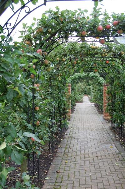RHS Wisley fruit garden