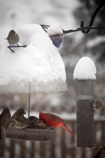 backyard bird feeder in winter