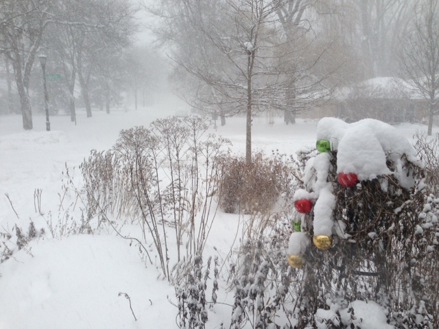 Everything looks better with fresh snow, even holiday baubles stuck in dead morning glory vines.