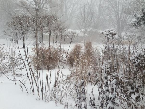 Front garden in the snow.