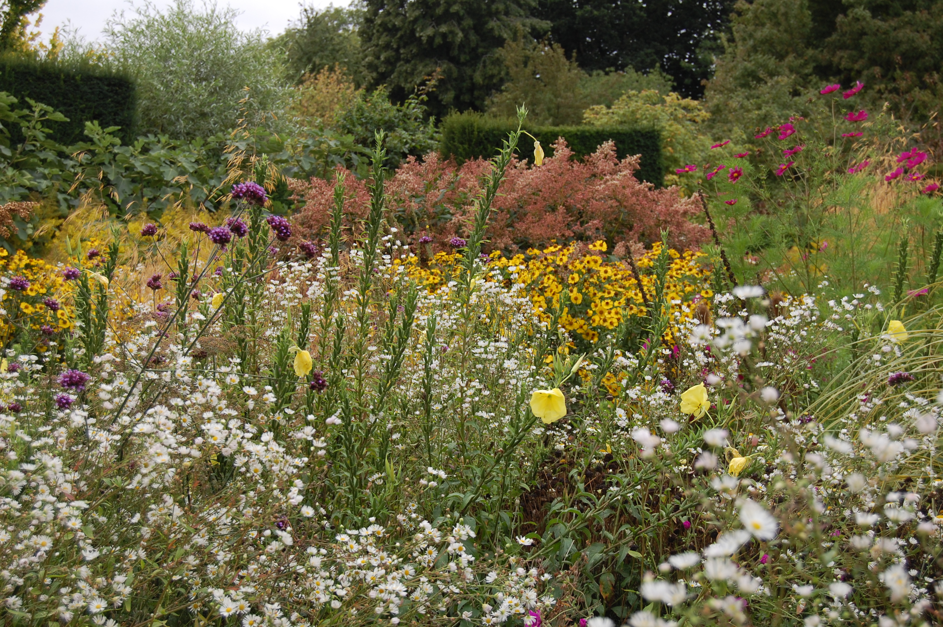 Our Favorite English Garden in September, Part 3 (Or, Anarchy in the ...