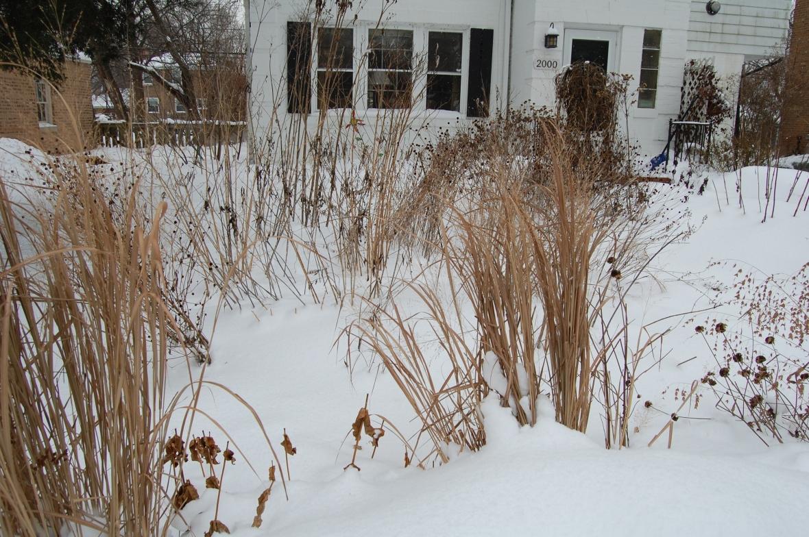 2014-02-08 13.43.42 front garden in winter.