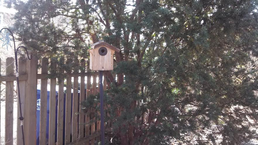 My chickadee house, now on a pole. Oh, and I did fix the roof.